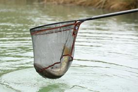 Guru Competition 400 Landing Net